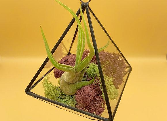 Small Air Plant Terrarium