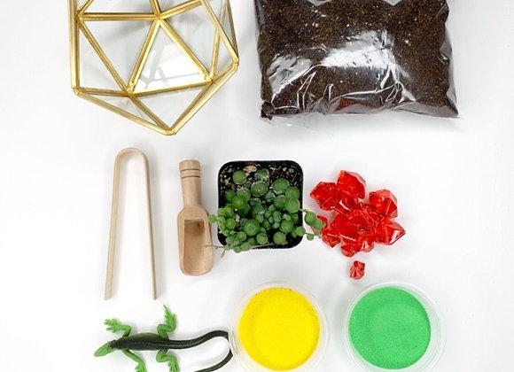 Basic Terrarium Kit