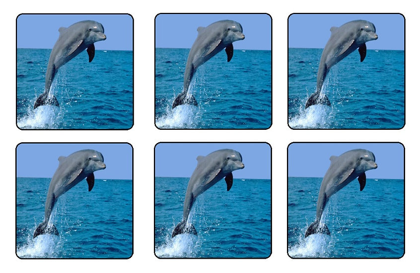 DOLPHIN BEVERAGE COASTERS