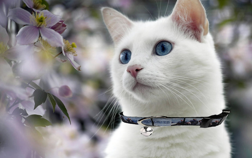LAW AND ORDER CAT COLLAR