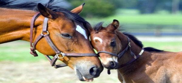 HORSE & FOLE CERAMIC MUG