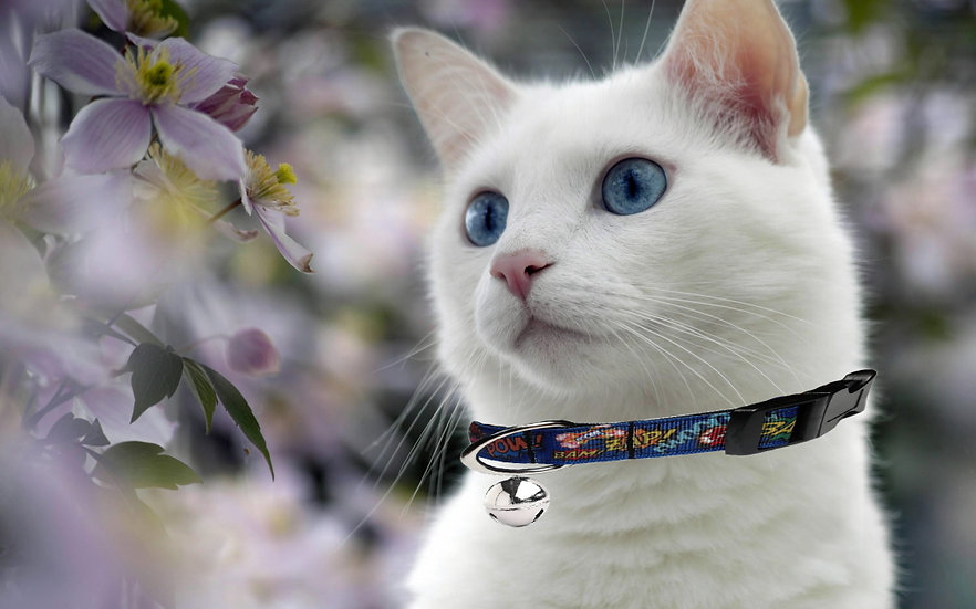 DC COMICS CAT COLLAR