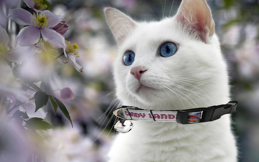 CANDYLAND BOARD GAME CAT COLLAR