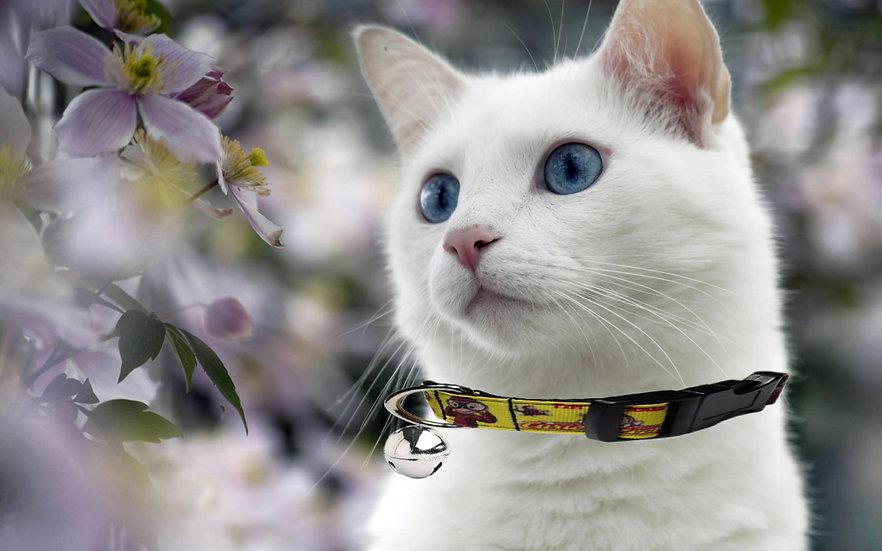 CURIOUS GEORGE CAT COLLAR