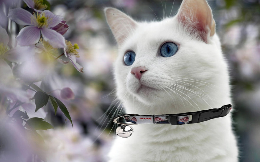 DEXTER CAT COLLAR