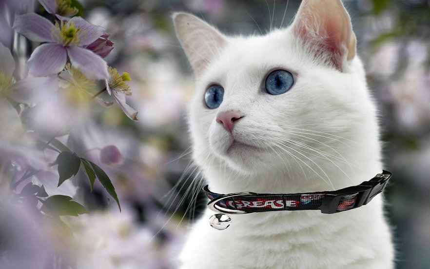 GREASE CAT COLLAR