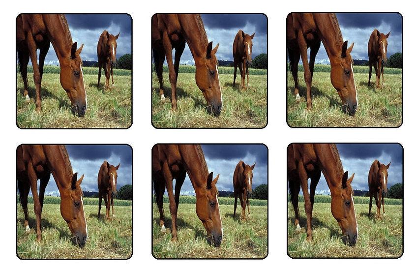 HORSE BEVERAGE COASTERS