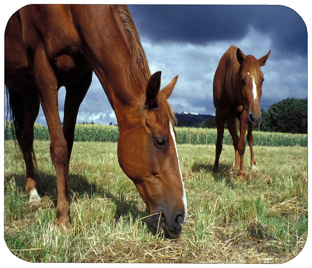 JUST GRAZIN' HORSE MOUSE PAD