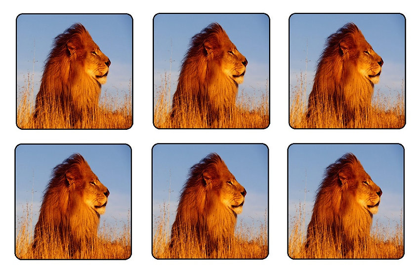 LION BEVERAGE COASTERS