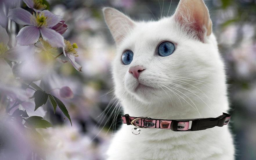 PINK STARBUCKS CAT COLLAR