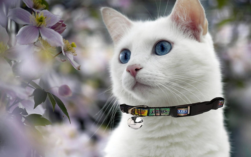 CEREAL BOXES CAT COLLAR