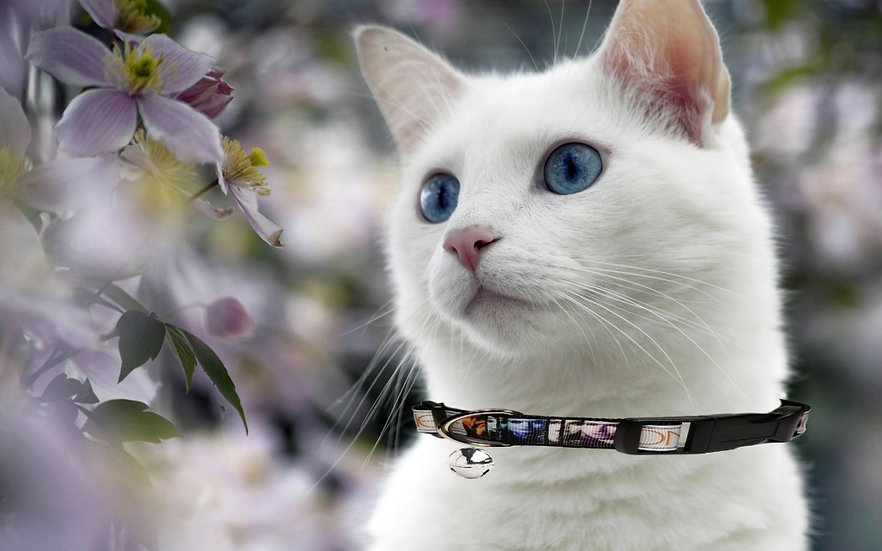 ONCE UPON A TIME CAT COLLAR