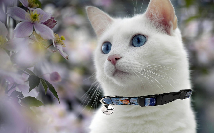 BEWITCHED CAT COLLAR