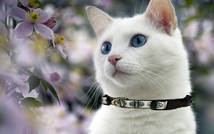 STARBUCKS CAT COLLAR