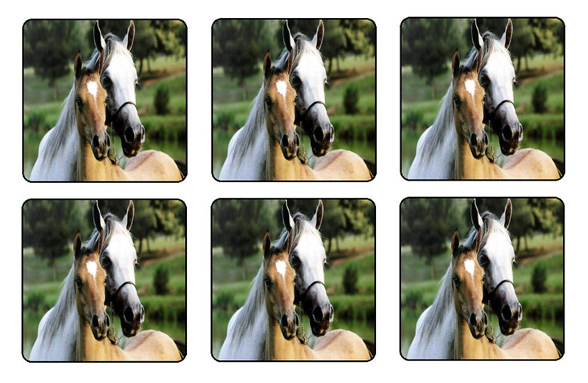 HORSE AND FOAL BEVERAGE COASTERS
