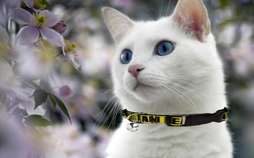 I AM DEAF HEARING IMPAIRED CAT COLLAR
