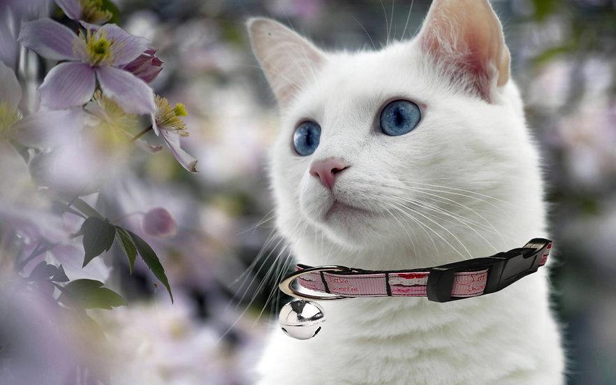 CUPCAKE CAT COLLAR