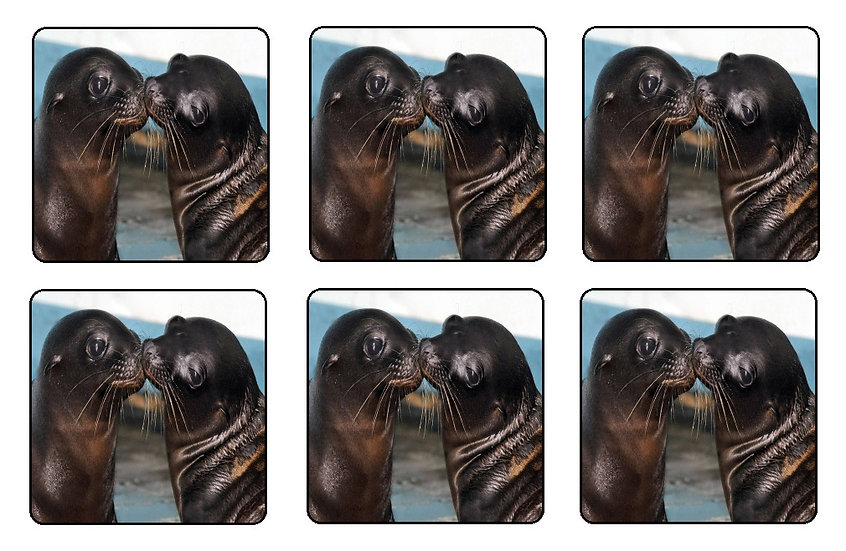 BABY SEAL BEVERAGE COASTERS