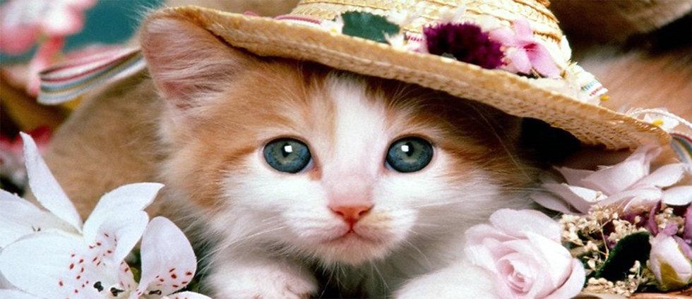 KITTEN WEARING HAT CERAMIC MUG