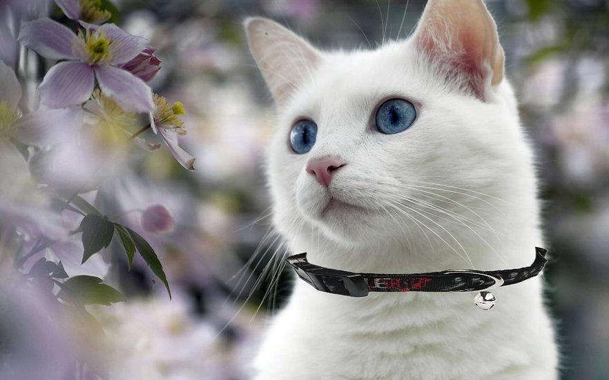TRUE BLOOD CAT COLLAR