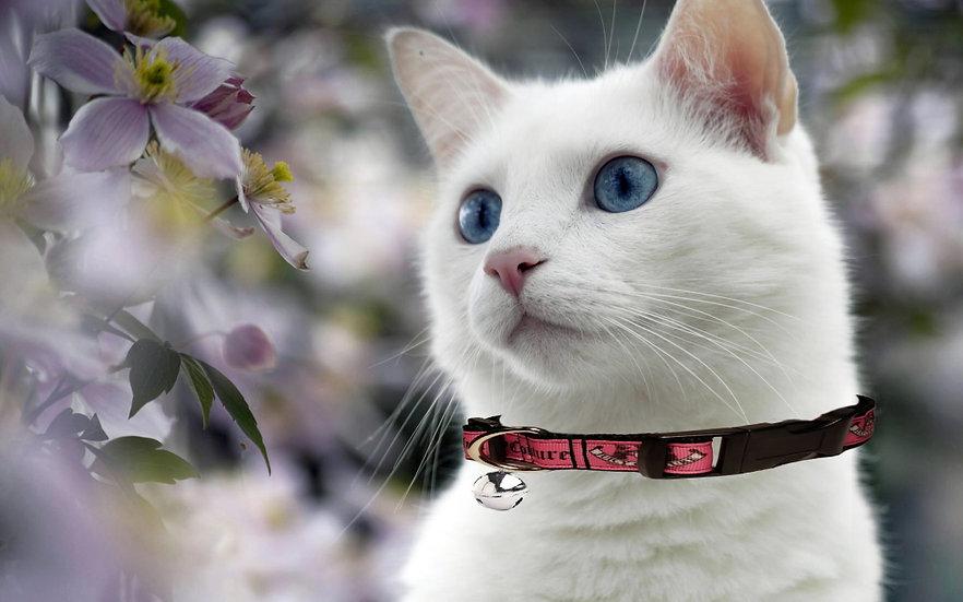 JUICY COUTURE CAT COLLAR