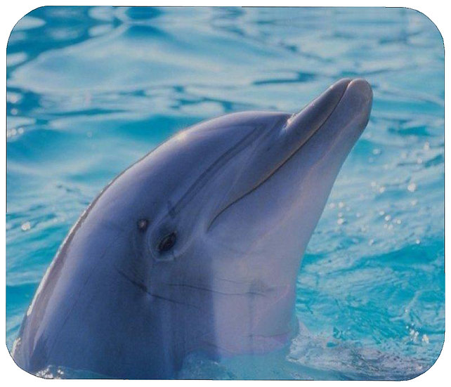 DOLPHIN MOUSE PAD - (615)