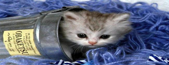 CUTE KITTEN IN CAN CERAMIC MUG