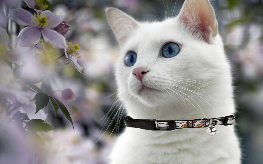 70s RETRO CAT COLLAR