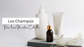 Champús para el Cabello: Función & Guía de productos para cabello rizado.