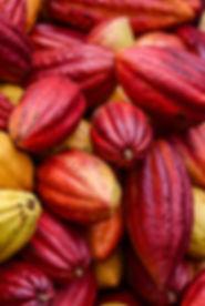 Hawaiian Cacao Pods