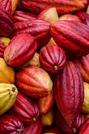 Hawaiian Cacao Pods
