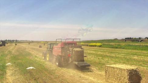 Wheat baler at work.