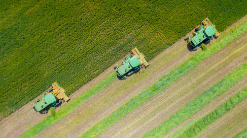Wheat silage harvest