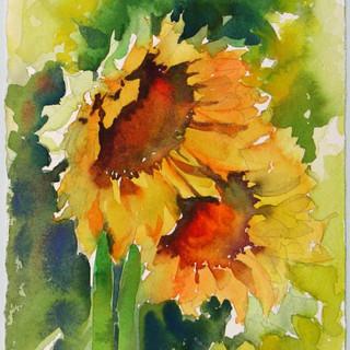 Sun Sisters, Kathryn Wedge