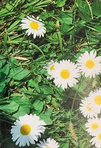 Daisy%20(2)_edited.jpg
