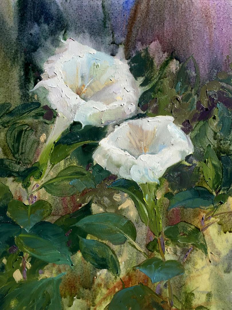 Moonflowers, Steve Puttrich