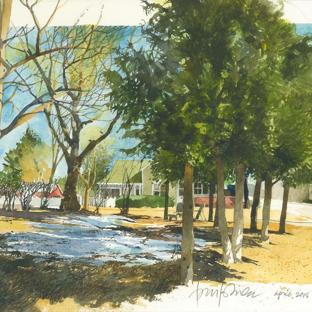 Tom Kubala, Sitting with Cedars,Watercolor