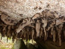 Native Bee colony-Coxs River BlueMtn