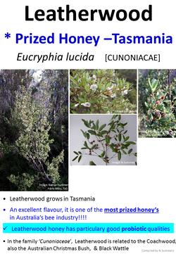 Leatherwood Honey TAS