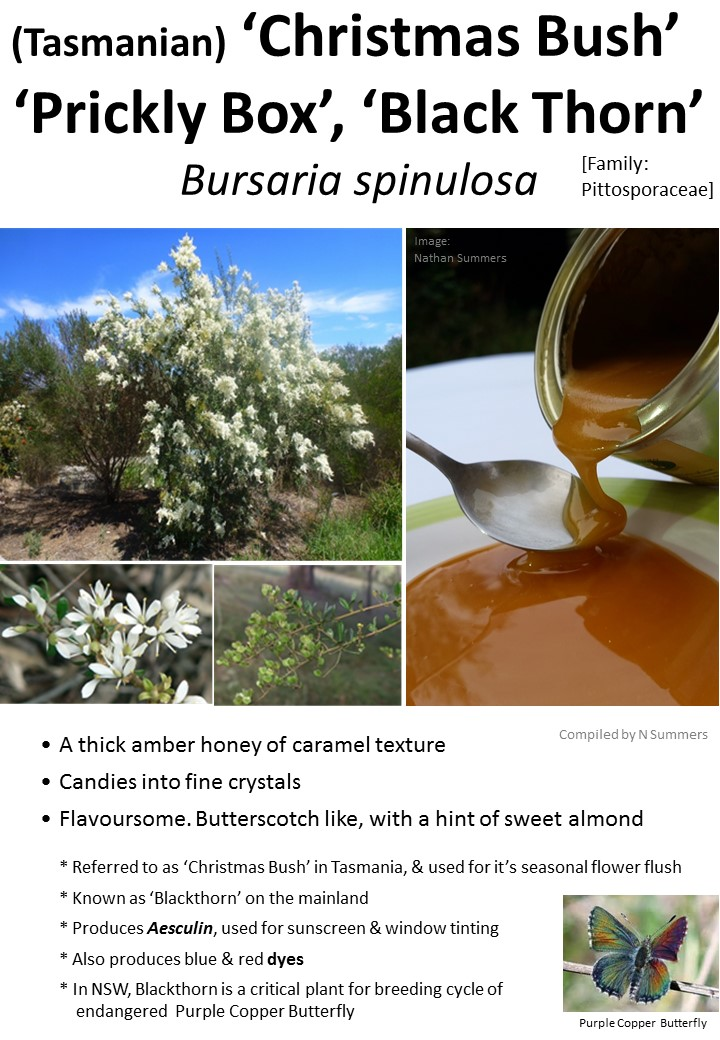 Christmas Bush-Blackthorn Honey TAS