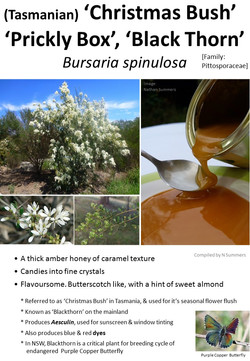 Christmas Bush-Blackthorn Honey TAS