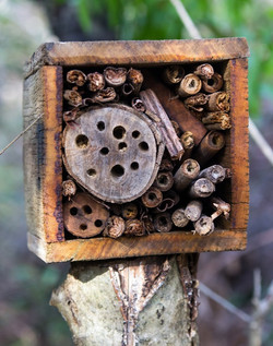 Bee Hotel-Leura PS-June2017 via Winnie_e