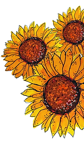 sunflowers for caliornia country gal