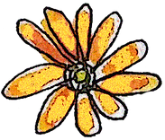 Daisy flower.png