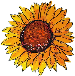 sunflower for California Country Gal