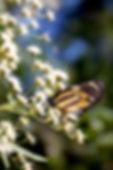 nature-1175318.jpg