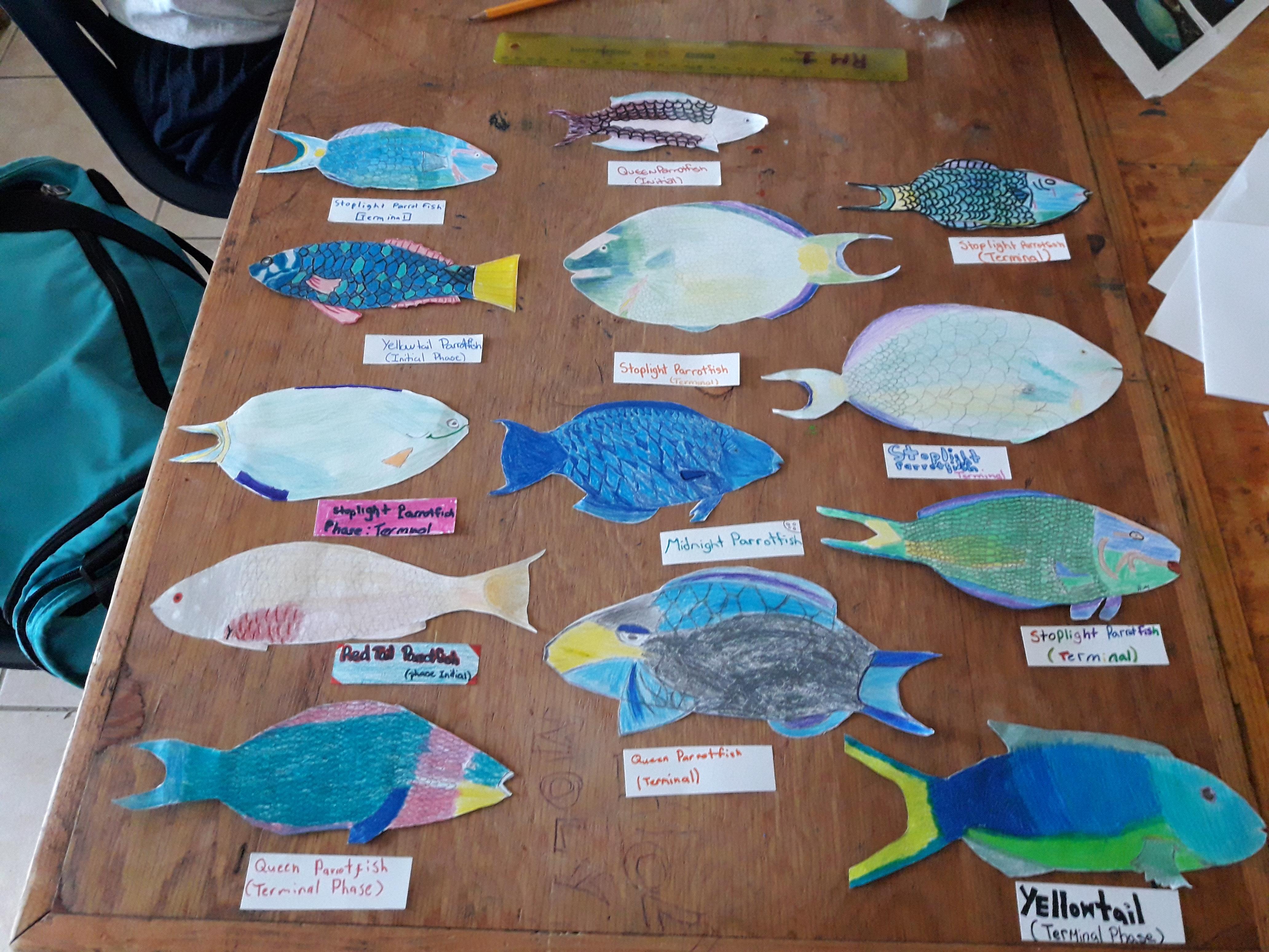 Parrotfish art.jpg