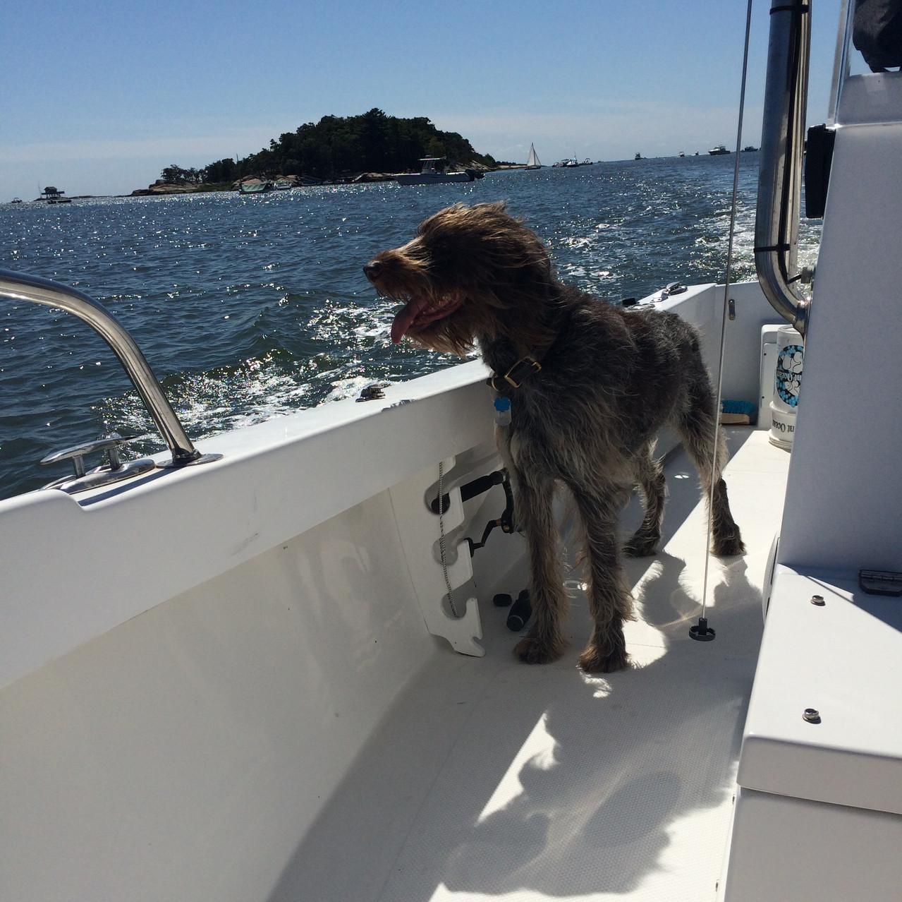 Piper boat