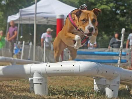 Training Behaviors with Love The Dog treats!