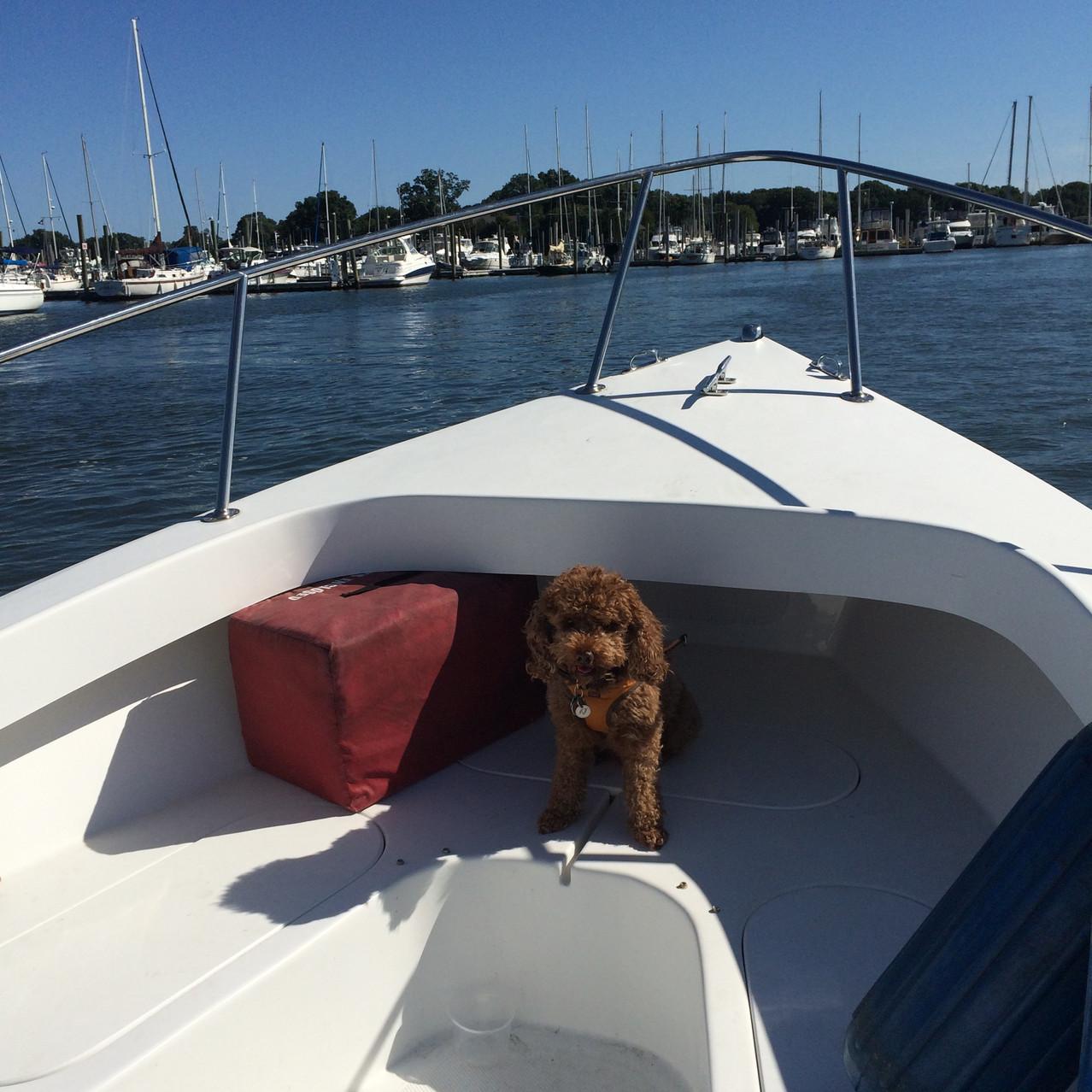Jin Boat
